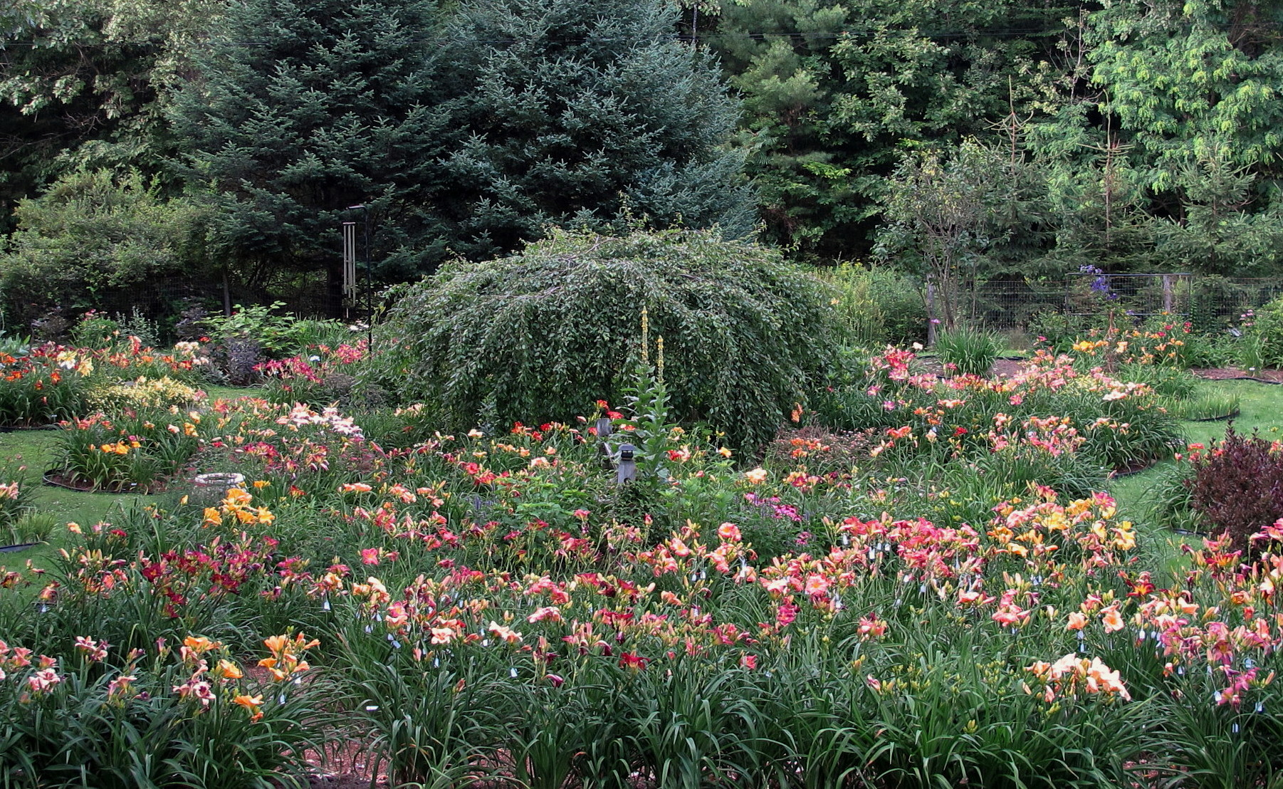 ... Connecticut River Valley, Holdnu0027 Heaven Is An AHS Display Garden  Designed To Showcase A Growing Daylily Collection With Mixed Beds Including  Perennials ...